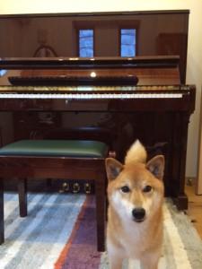 ペトロフ P125 ピアノパッサージュ